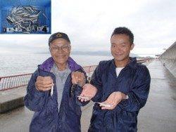 サビキでイワシ大漁!神戸市立平磯海づり公園