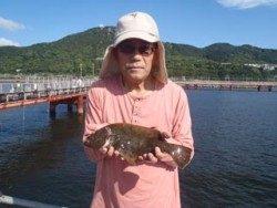 須磨海釣り公園 のませでヒラメ37cm
