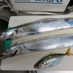 かご釣りのち太刀魚