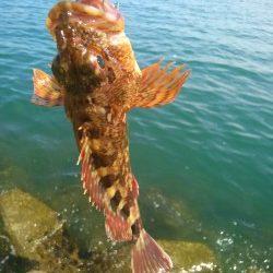妻鹿漁港ダンゴ釣り