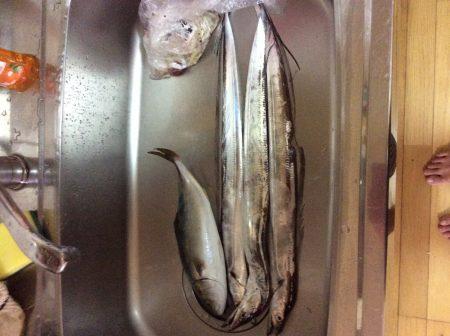 佐野川 ツバス 太刀魚 サワラ