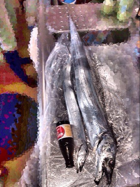 連日太刀魚ドラゴン調査