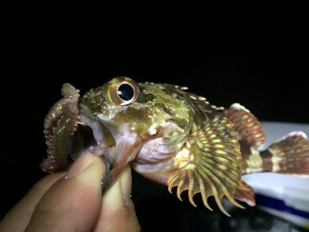 半夜釣り〜