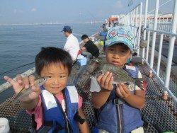 サッパが安定して釣れています。尼崎市立魚つり公園