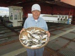尼崎市立魚つり公園 サバ戻ってきました