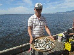 尼崎市立魚つり公園 好調続きのサビキ