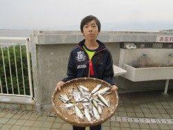 尼崎市立魚つり公園 イワシの爆釣継続中!