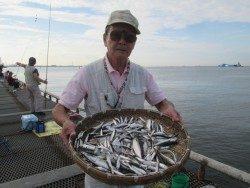 尼崎市立魚つり公園 サビキ入れ食い
