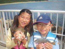 姫路市立遊魚センター チヌ、タケノコメバルなどの釣果