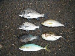 和歌山北港魚つり公園 五目釣り