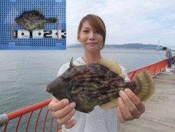 平磯海釣り公園 投げ釣りでカワハギ25.5cm