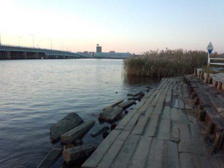海老江公園 ハゼ育ってます