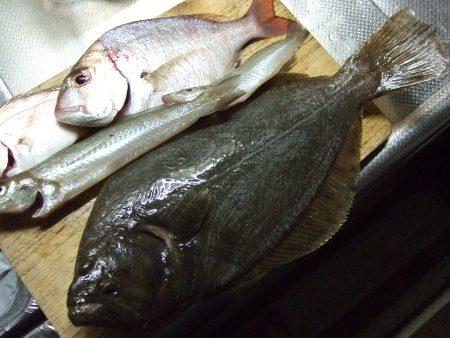アジ、キス、鯛、などなどいろいろ釣れました。