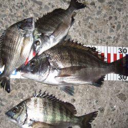ひさしぶりの紀州釣り。