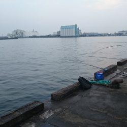海上釣り堀活エサ確保が使命、ってことでサビキ釣り♪食コン