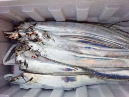太刀魚好調キープ