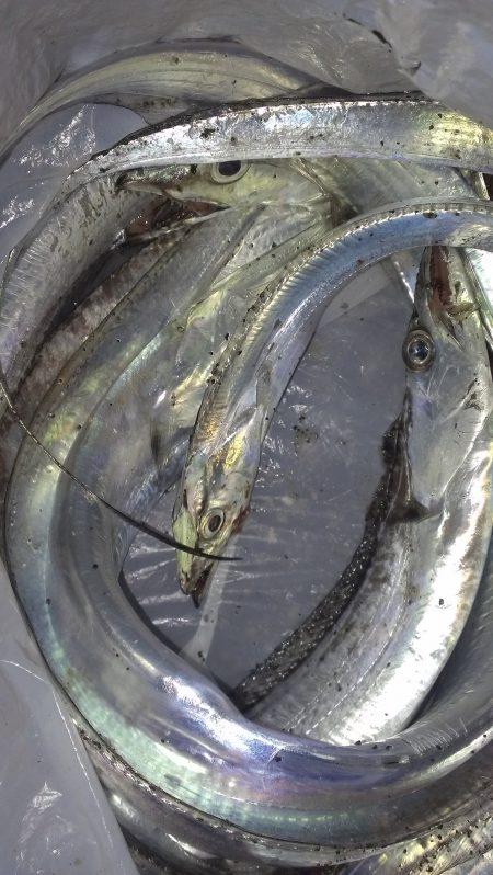ボウズのち好釣果、オマケにサゴシ