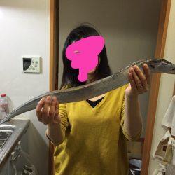 ワインドで太刀魚