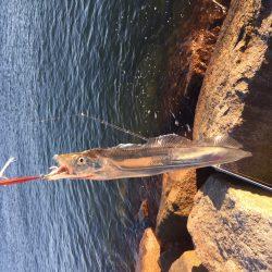 今季初太刀魚釣行