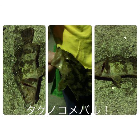アジング…タケノコメバル