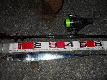 夜釣りでタチウオ釣り!?
