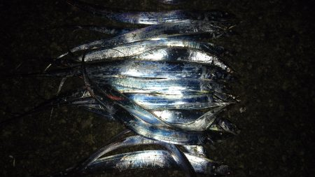 太刀魚ワインドで爆釣!