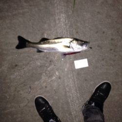 シーバス釣り