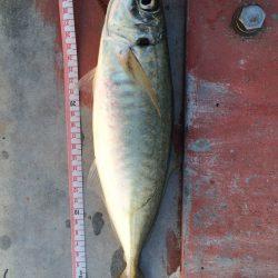 久々の太刀魚とオマケ