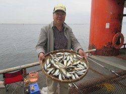 尼崎市立魚つり公園 今日もサビキは絶好調!