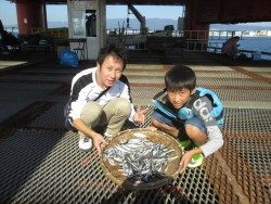 尼崎海釣り公園 サビキでイワシ・サッパ・アジ・サヨリなど
