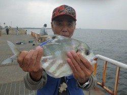 大阪南港海釣り公園 イトヒキアジほか