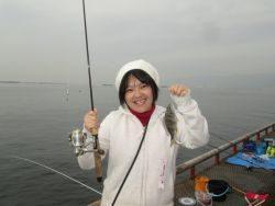 尼崎市立魚つり公園 サヨリの釣果は安定!