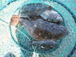 和歌山北港魚つり公園 ヒラメにグレにアイゴ!