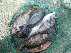 和歌山北港魚つり公園 投稿