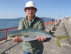 神戸市立平磯海づり公園 ノマセでメジロ