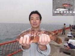 平磯海釣り公園 ウキ釣りでアコウ・ハネ