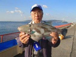 神戸市立平磯海づり公園 ウマヅラハギ 記録賞!