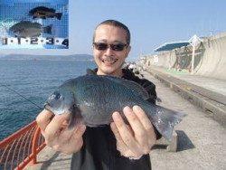 神戸市立平磯海づり公園 ウキ釣りでグレ、メバル