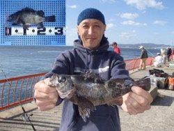 平磯海釣り公園 ウキ釣りでメバル28.5cm