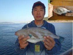 須磨海釣り公園 ハゲ掛けでウマヅラ39.2cm