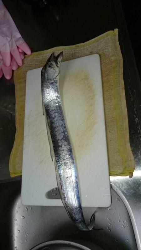 塩津漁港で太刀魚!