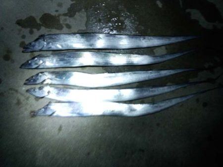 マリーナシティで刀狩り、アタリ多く楽しめます