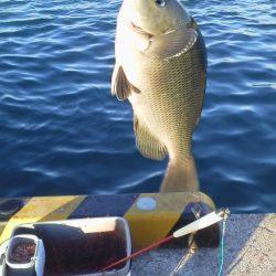 魚おらず・・・やっと20cmグレ・・・