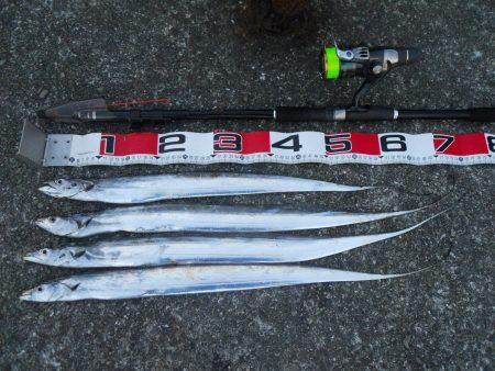 早朝~タチウオのウキ釣り