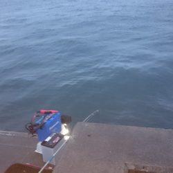 サビキ釣り、投光器点けて頑張るも。