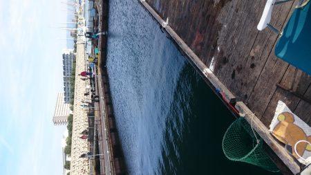 海上釣り堀田尻、カンパチ狙いへ