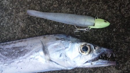 タチウオ釣り