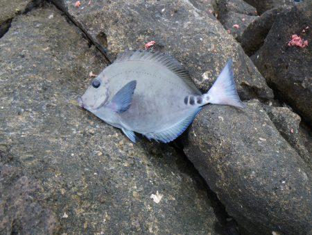 臭い外道魚