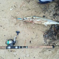 サゴシ釣れました