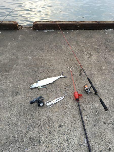 思わぬ魚が釣れましたー